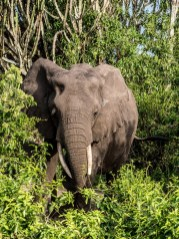 Queen Elizabeth National Park-93
