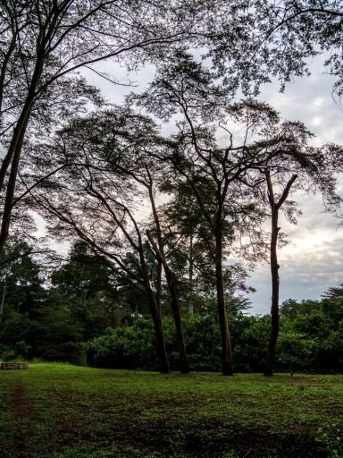Queen Elizabeth National Park : Isihasha Jungle Lodge