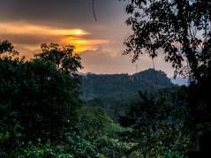 Bwindi Impenetrable Forest-7