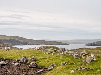 Culswick Broch Shetland-19