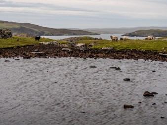 Culswick Broch Shetland-20
