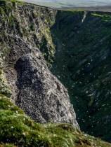 ïUnst : Hermaness National Nature Preserve