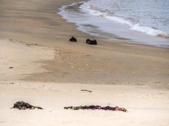 ïles Shetland, Unst : Skaw Beach