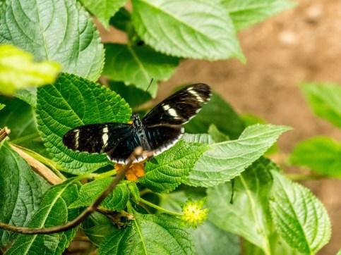 Grange aux Papillons, Virelles