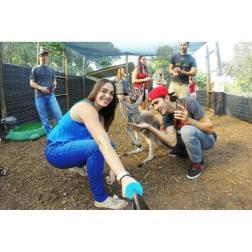 Safari Edventure - Feeding the Kangaroo