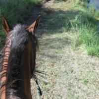 Endurance Horse Skillz