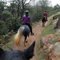 50 things to know before your first 50 mile endurance ride