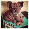 French bulldog puppy cake
