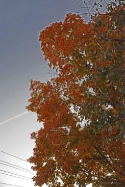 southport-parade-halloween-2014-158