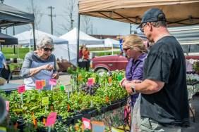 noblesville-farmers-market-9382