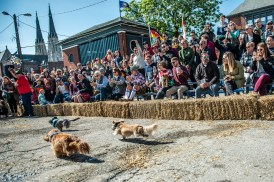 Many enjoyed German beer & food, live Wiener Dog Races, and more at the 10th Annual German Fest at the Athenaeum on October 13, 2018