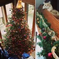 Christmas (and Phlox -- Amanda and Hengyi's Cat)