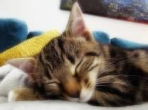 Kitten-001