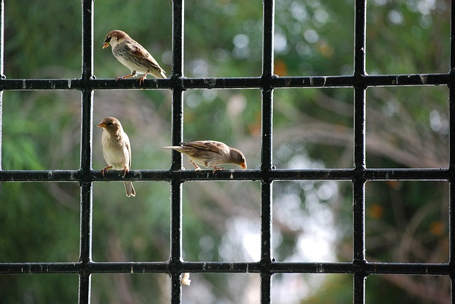 Sparrows sitting on the window railing