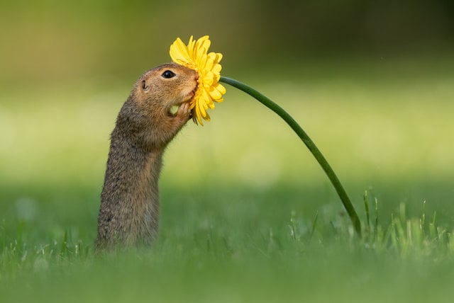 Squirrel sniffing a flower, Cute squirrel Pictures