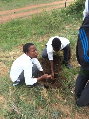 Some of the boys planting Blessing the Pine Tree