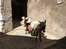 They still use donkeys to transport materials in the medina because of the narrow alleys and stairs. It was hilarious seeing men riding them too
