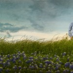 engagement portraits in bluebonnets, engagement pictures, photographer in Conroe