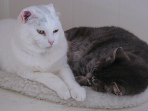 Mr. Shadow curled up asleep, with Mr. Bell awake next to him.