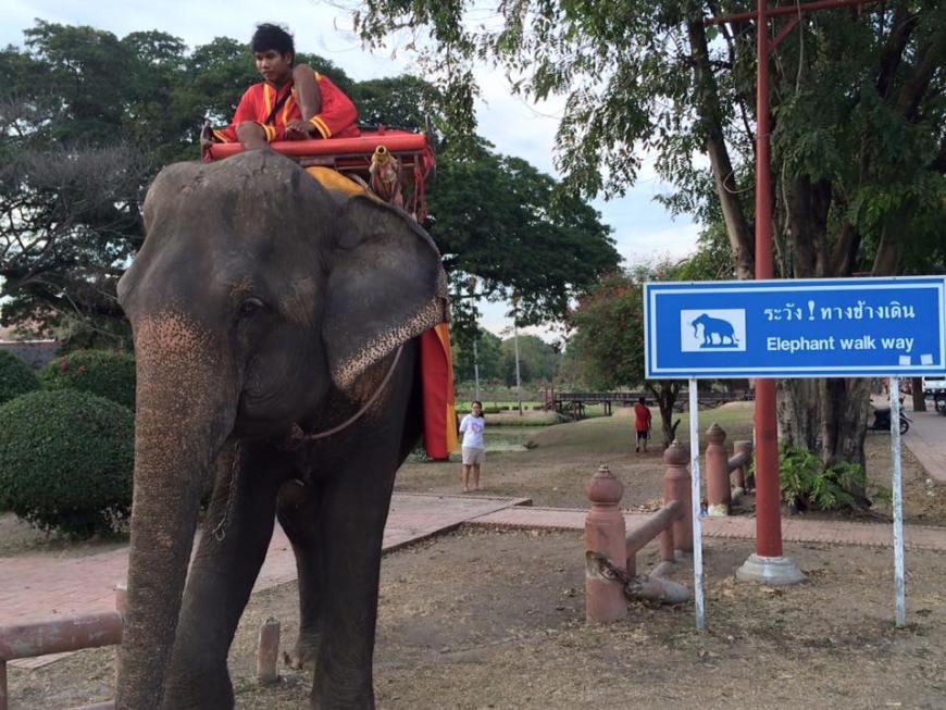 elefante en las ruinas de Ayutthaya