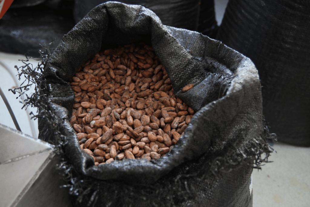 specialty coffee in Peru_tesoro amazonico_cocoa beans