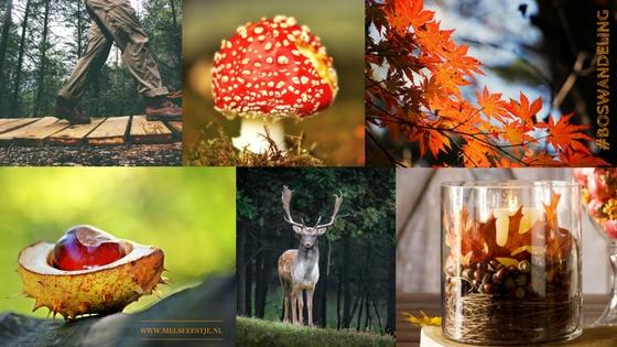 ☘️ HERFST #1. BOSWANDELING ☘️ (van 10x Herfst Sfeer Creëren) Als eerste denk ik bij Herfst aan een boswandeling. Zoveel mooie kleuren en geweldige plaatjes. Eigenlijk moet je de herfstvakantie beginnen met een boswandeling. Verzamel eikeltjes, mooie gele herfst bladeren, ga opzoek naar de rood met witte stippen paddenstoel, zie een hert! & Knutsel tijdens de vakantie. Vul een glazen vaas met als je herfst vondsten uit de natuur. Mels Feestje & 10x Herfst Sfeer Creëren