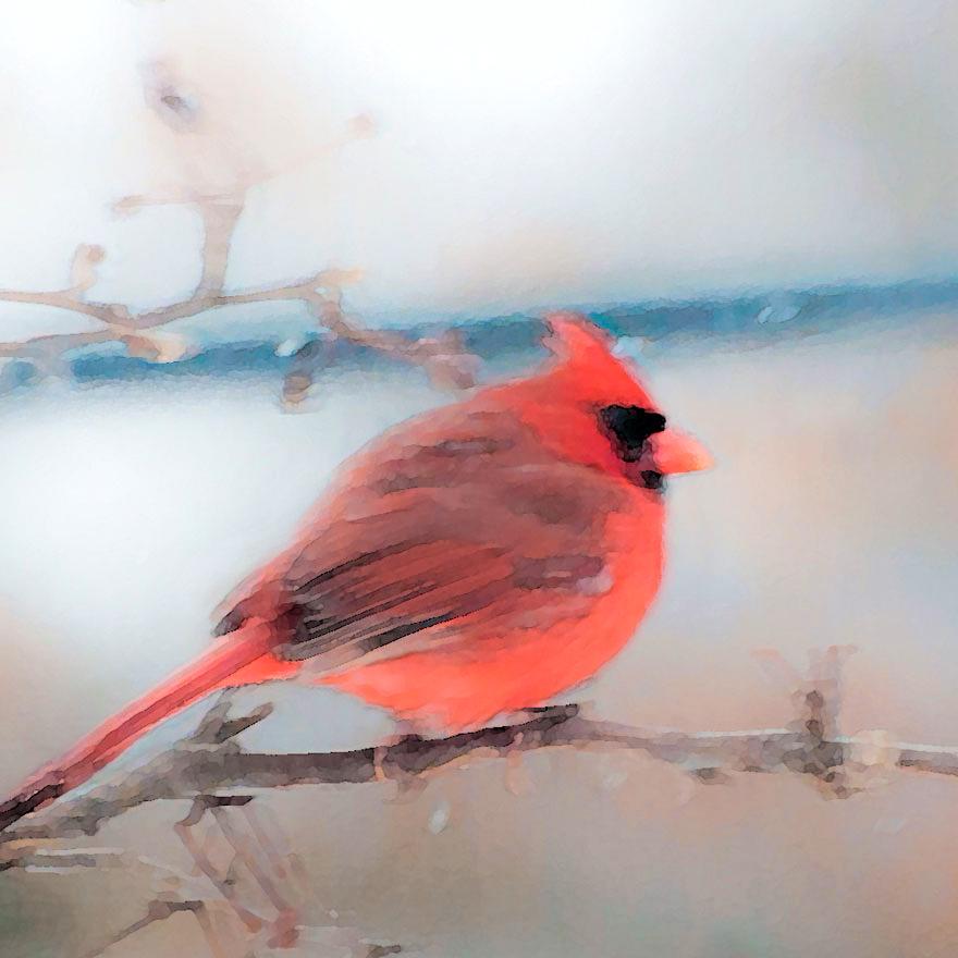 cardinal.jpg?fit=880%2C880