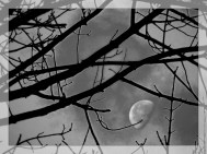 Phantom Moon