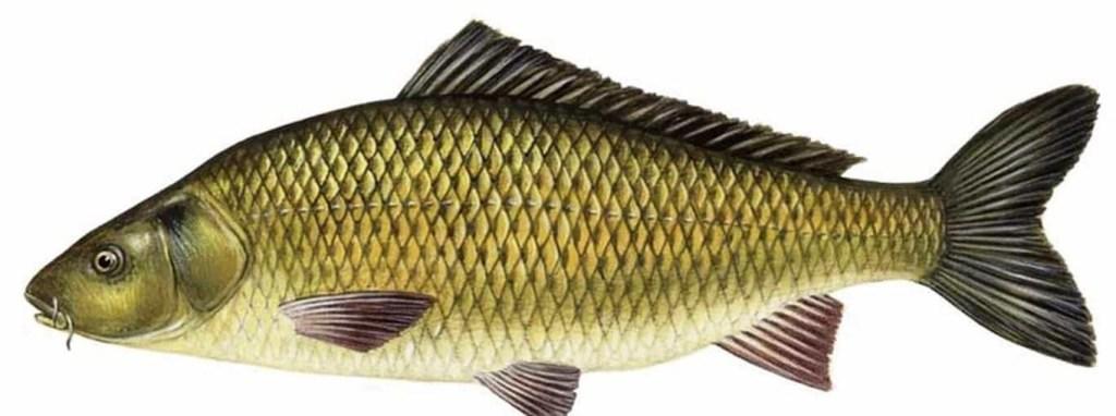 Ikan yang paling laris