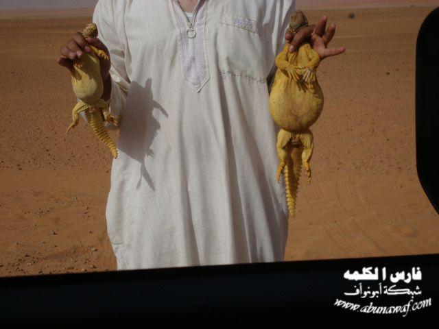 تفری� عرب ها با سوسمار خواری