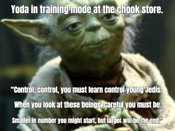 Yoda In Training Mode At The Chook Store Control Control You
