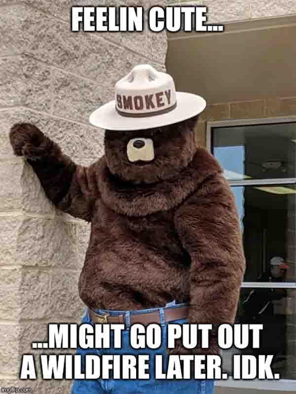 80 Best Bear Meme Meme Central