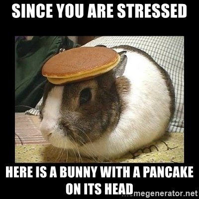 Since You Are Stressed Here Is A Bunny With A Pancake On Its Head
