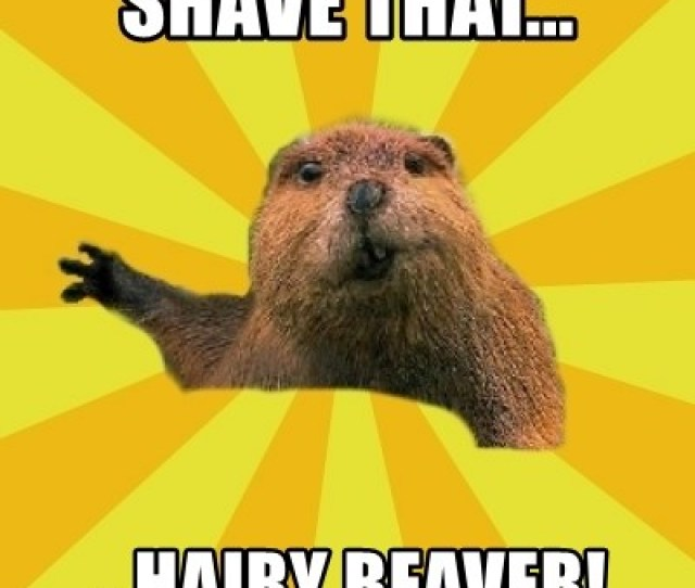 Grumpy Beaver Shave That Hairy Beaver