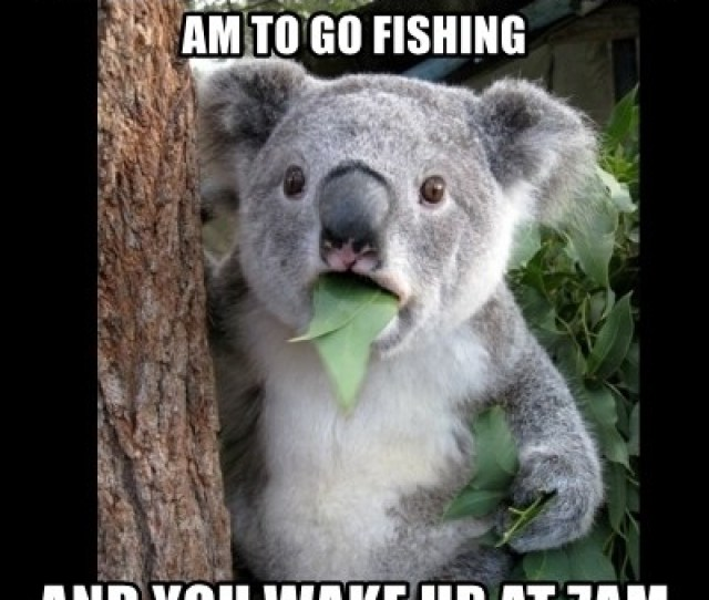When You Set Your Alarm For 5 Am To Go Fishing And You Wake Up At 7am Koala Cant Believe It Meme Generator