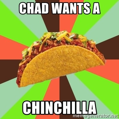 Chad Wants A Chinchilla Say Yes To Taco Meme Generator