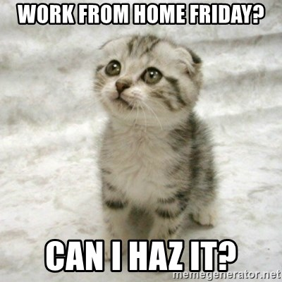 Work From Home Friday Can I Haz It Can Haz Cat Meme Generator