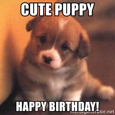Cute Puppy Happy Birthday Cute Puppy Meme Generator