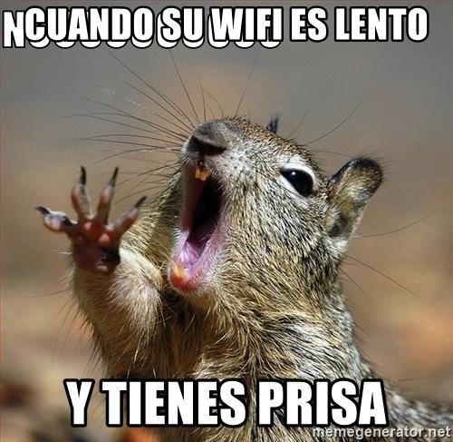 Cuando Su Wifi Es Lento Y Tienes Prisa Nooo Squirrel Meme