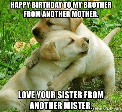 Happy Birthday To My Brother From Another Mother Love Your Sister From Another Mister Hugging Puppies Meme Generator