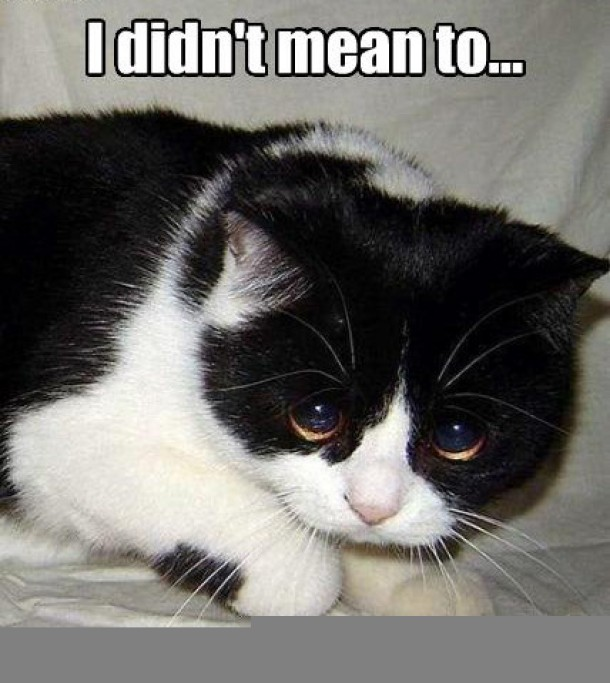 Friday Funnies Exterro S E Discovery Meme Series Santa Cat Edition Exterro
