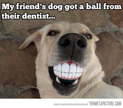 http://dogtutorial.com/wp-content/uploads/2014/01/dog-teeth-ball-meme.jpg
