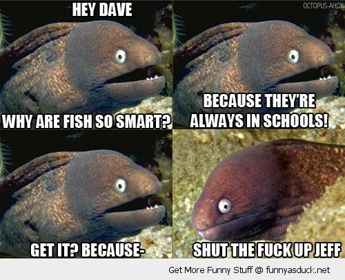 Fish Meme My Day