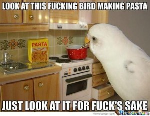 http://www.afunimages.com/wp-content/uploads/2014/06/Funny-Birds-In-The-Memes-5-300x232.jpg