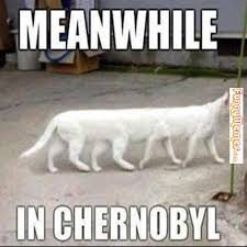 http://www.funnymemes.com/category/animal-memes/cat-memes-2/page/12/