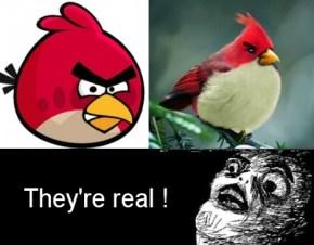 http://memeblender.com/wp-content/uploads/2011/11/meme-comic-angry-birds.jpg