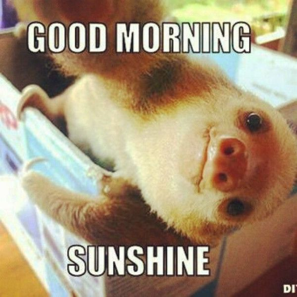 Funny Good Morning Meme - Cute And Beautiful Pictures For Him & Her