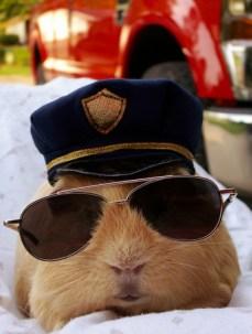 officer pig
