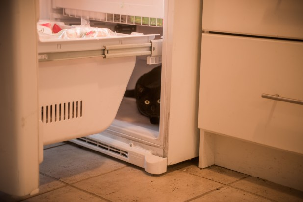 The cat decided to hide in the freezer