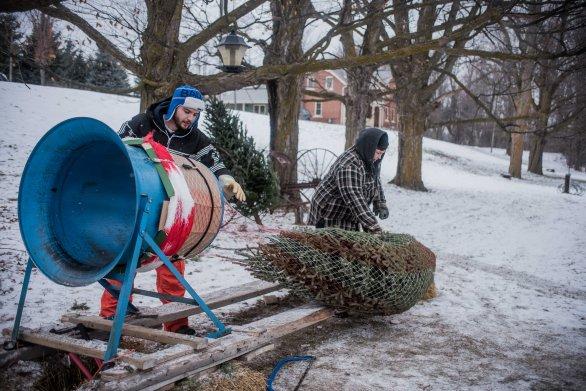to-kill-a-christmas-tree-12
